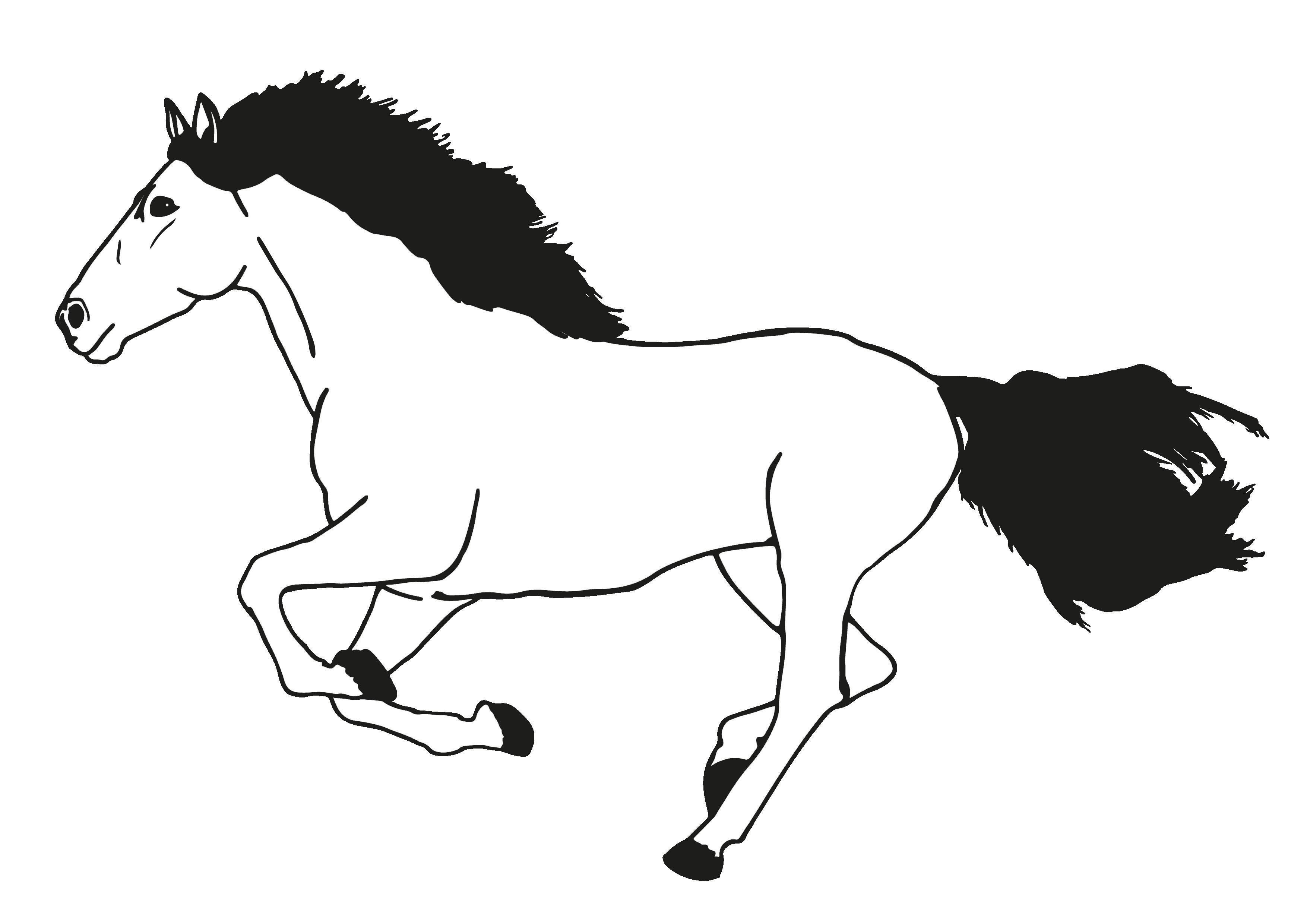 PNG Pferd Schwarz Weiss - 72179