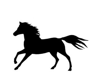 PNG Pferd Schwarz Weiss - 72182