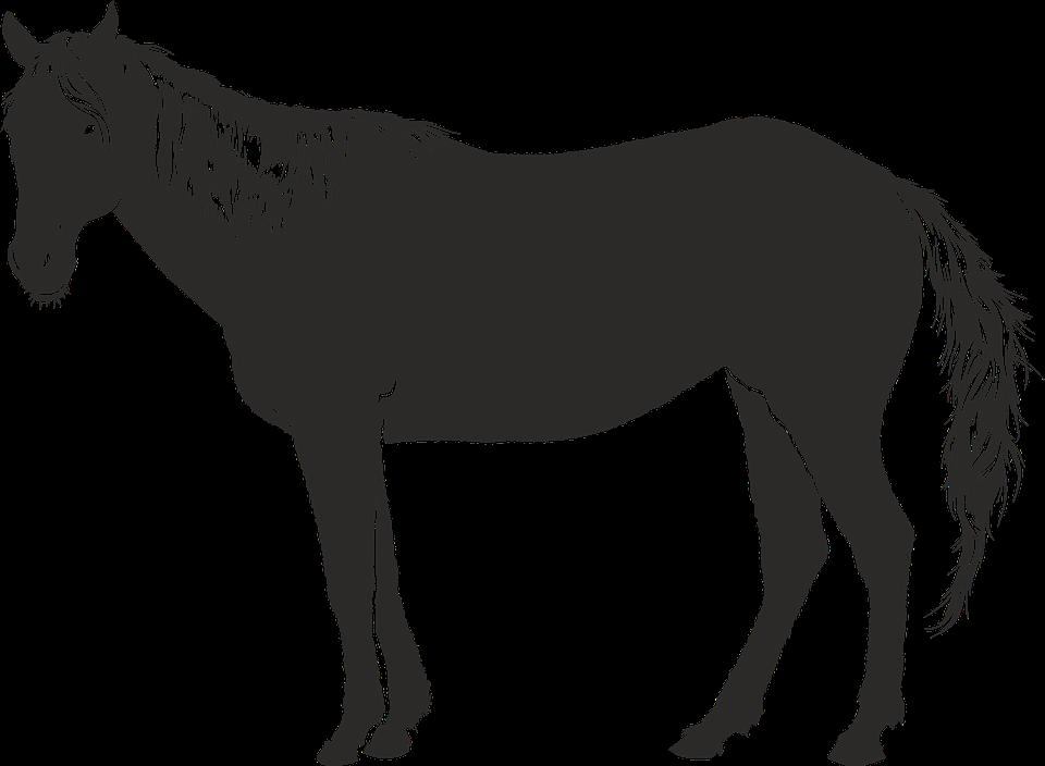 PNG Pferd Schwarz Weiss - 72188