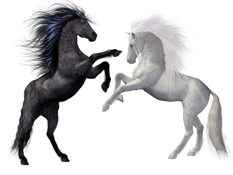PNG Pferd Schwarz Weiss - 72183
