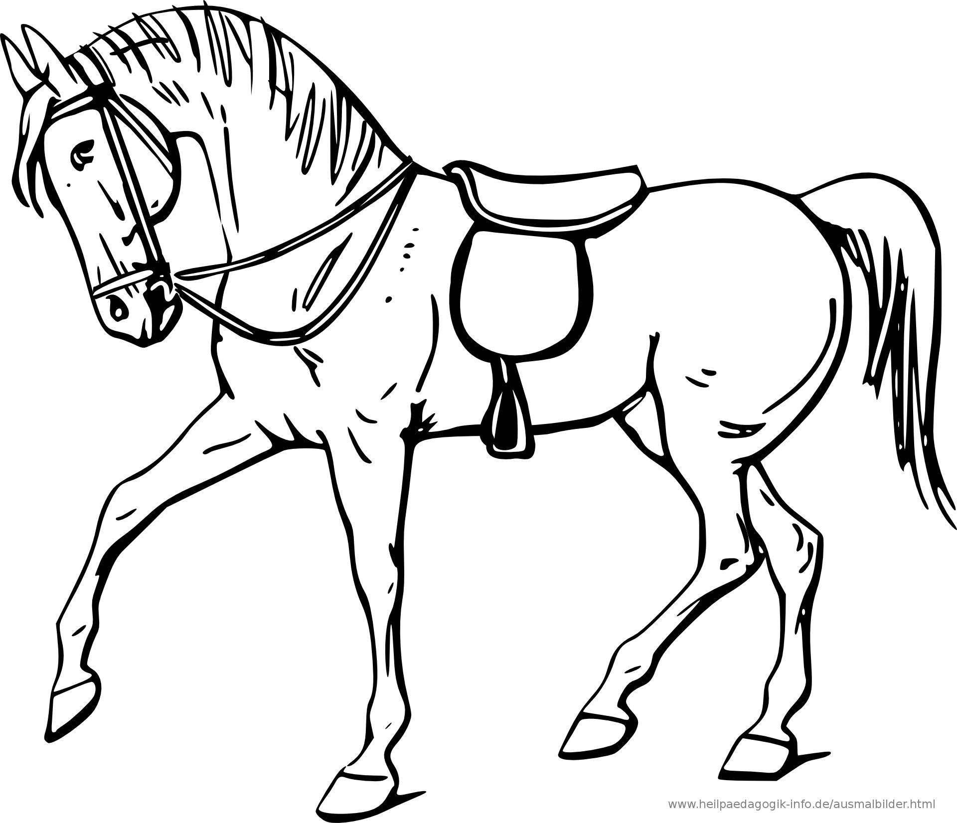 PNG Pferdekopf Kostenlos - 72431