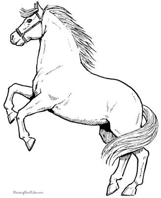 PNG Pferdekopf Kostenlos Transparent Pferdekopf Kostenlos.PNG Images ...