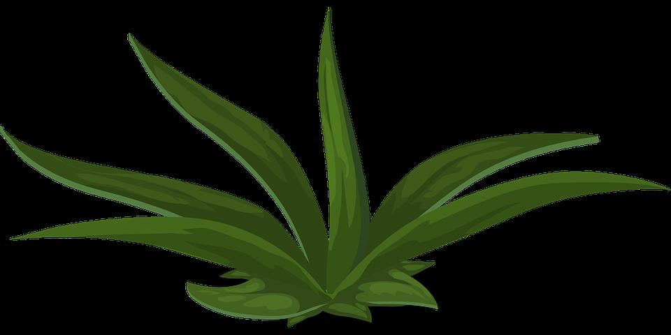 Grün, Pflanzen, Grünen, Laub, Lang, Hoch, Blätter, Wild