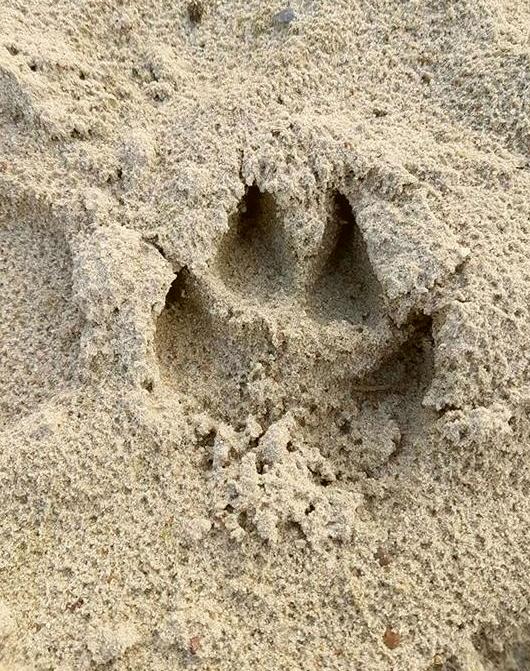 Hund Pfotenabdrücke
