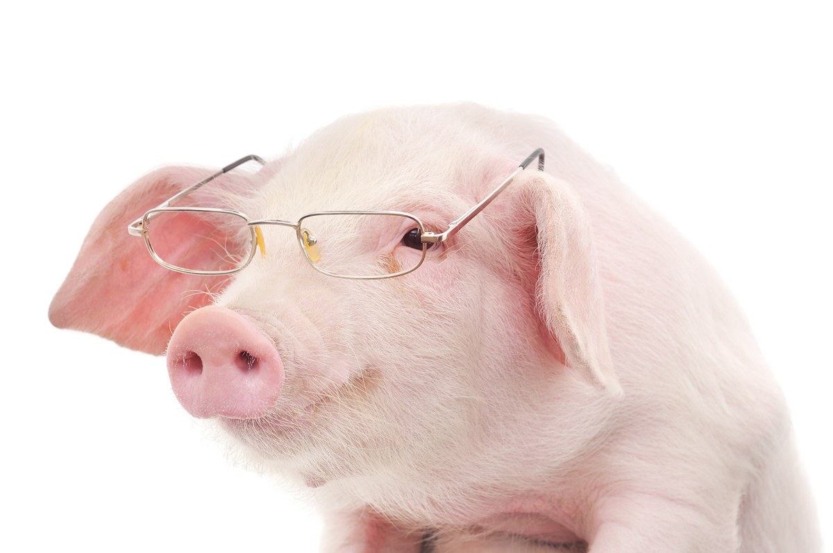 16a2715.png - PNG Piglet