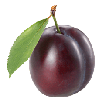 Plum Png Image PNG Image - PNG Plum