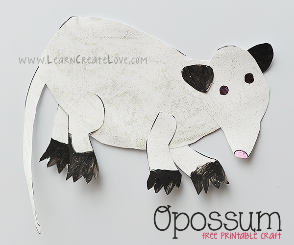 PNG Possum-PlusPNG.com-600 - PNG Possum