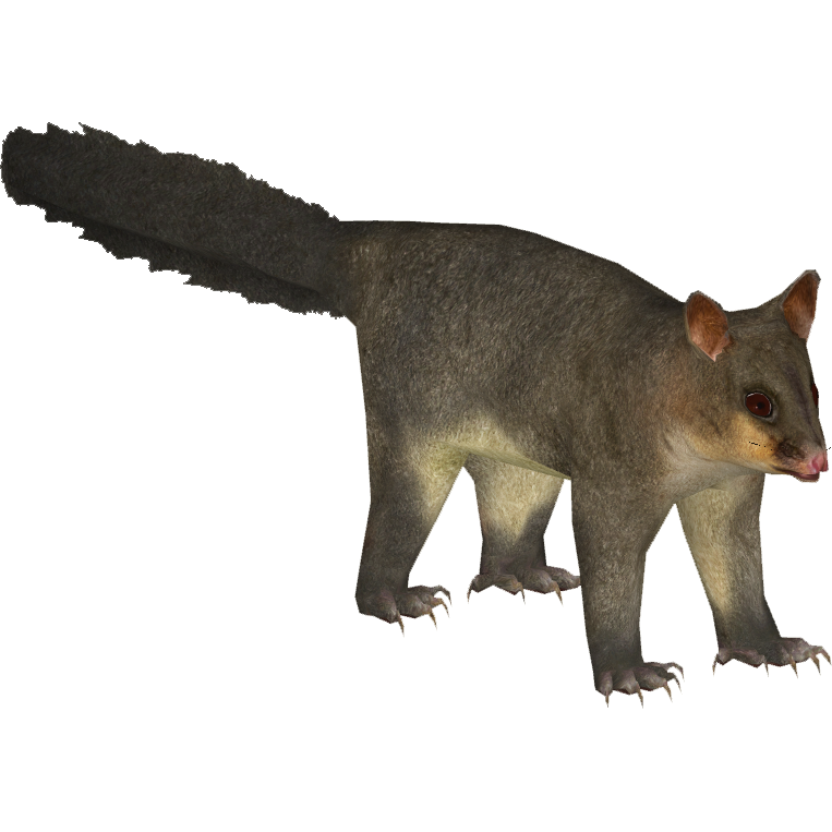 Common Brushtail Possum (Bohemian Rhapsody).png - PNG Possum