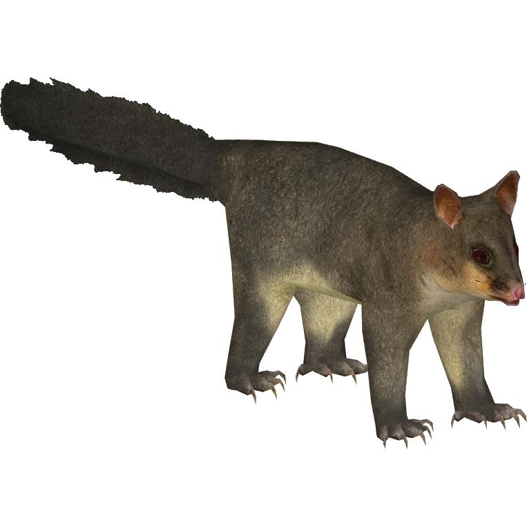 PNG Possum - 71603