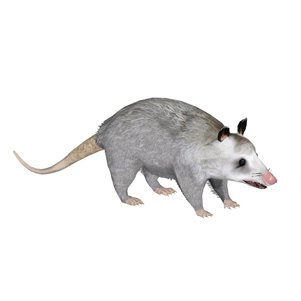 PNG Possum - 71609