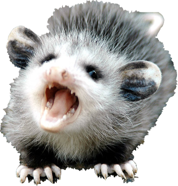 It doesnu0027t matter if you donu0027t believe in the Rally Possum. - PNG Possum