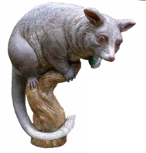 Ringtail Possum - PNG Possum