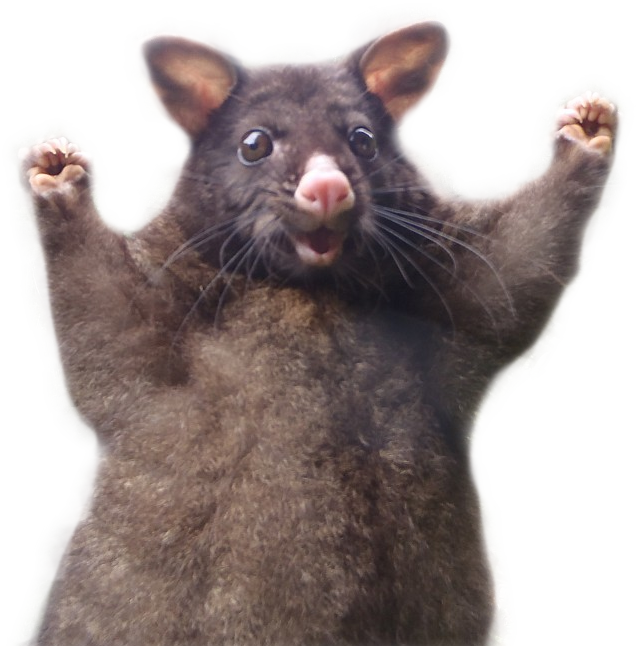 This Optimistic Possum Just Sparked A Hilarious Photoshop Battle - PNG Possum