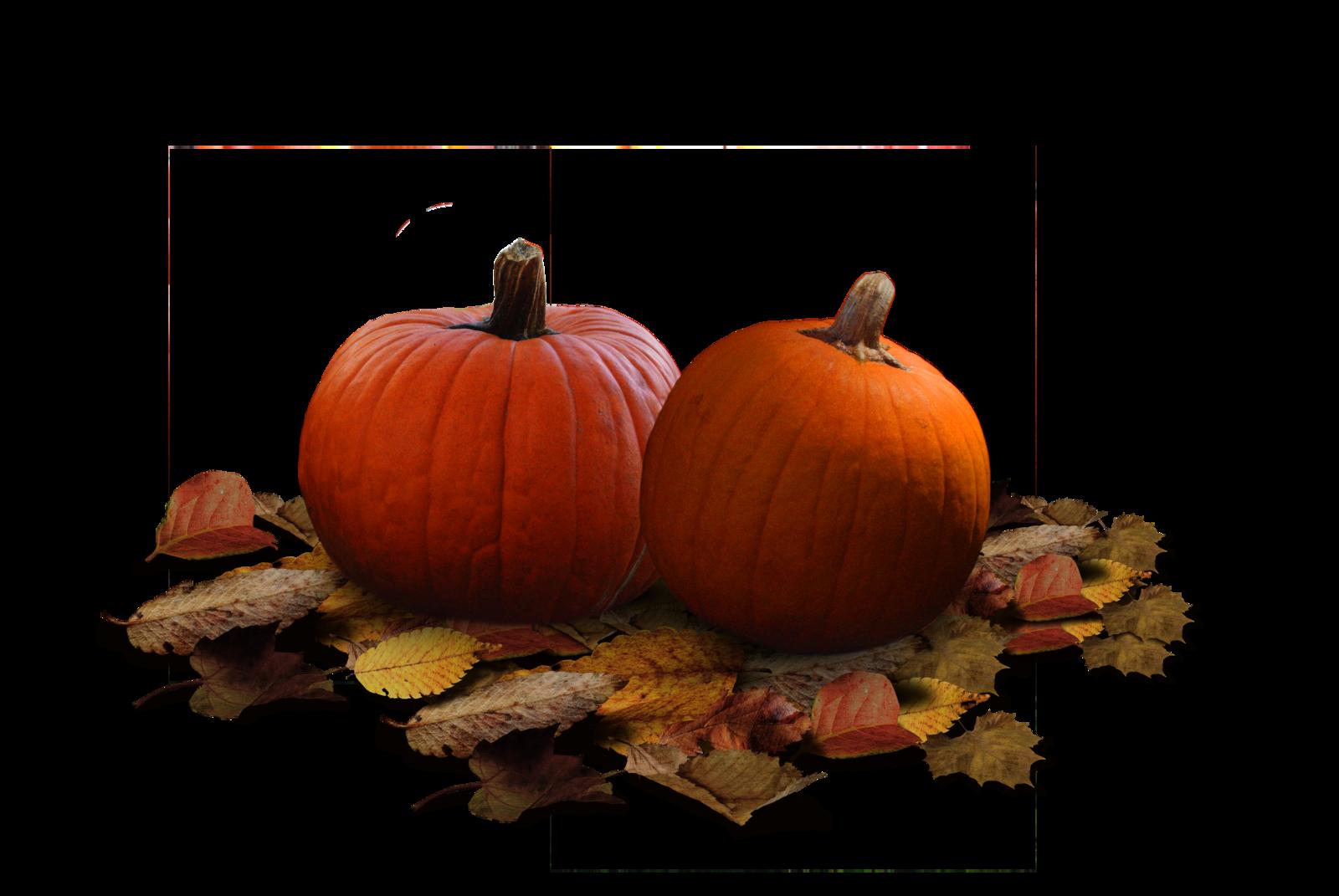 . PlusPng.com Pumpkin Patch Stock PNG by KarahRobinson-Art - PNG Pumpkin Patch