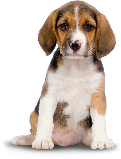 PNG Puppy Dog - 62190