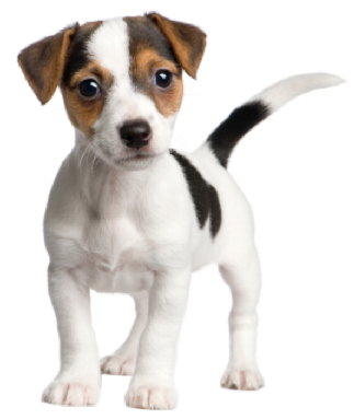 PNG Puppy Dog - 62194