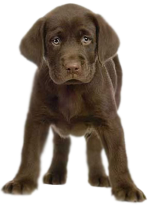 PNG Puppy Dog - 62199