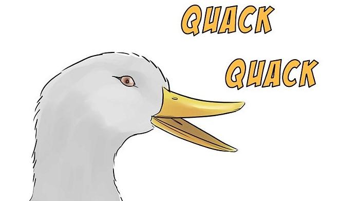 Full size PlusPng.com  - PNG Quack