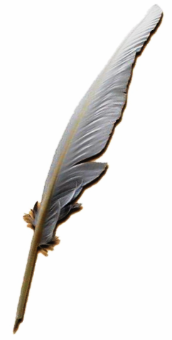 File:Quill pen.PNG - PNG Quill