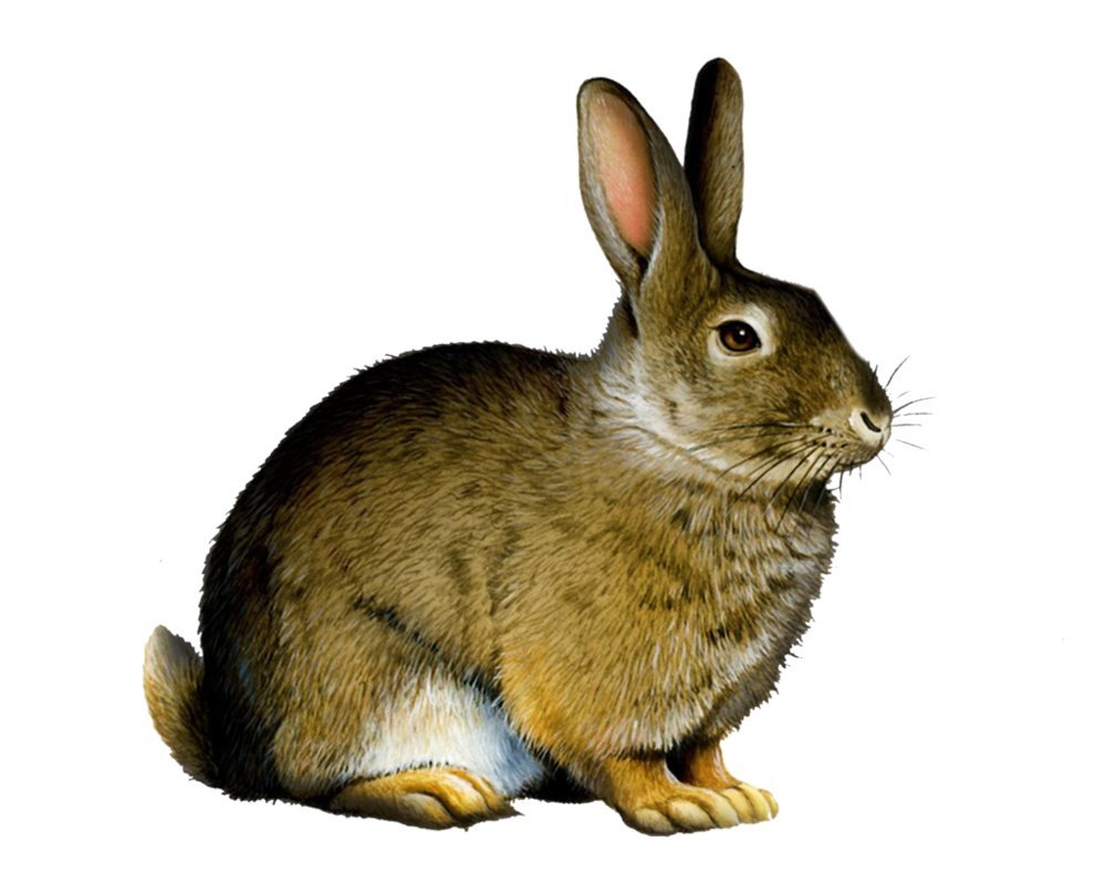 Png Rabbit by Moonglowlilly PlusPng.com  - Rabbit PNG