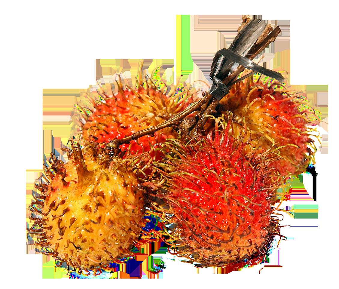 Resolution: 1128 x 961 | Format: PNG | Keywords: Fruits, Rambutan - PNG Rambutan