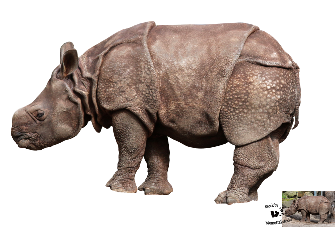 Cut-out stock PNG 87 - baby rhinoceros by Momotte2stocks - PNG Rhino
