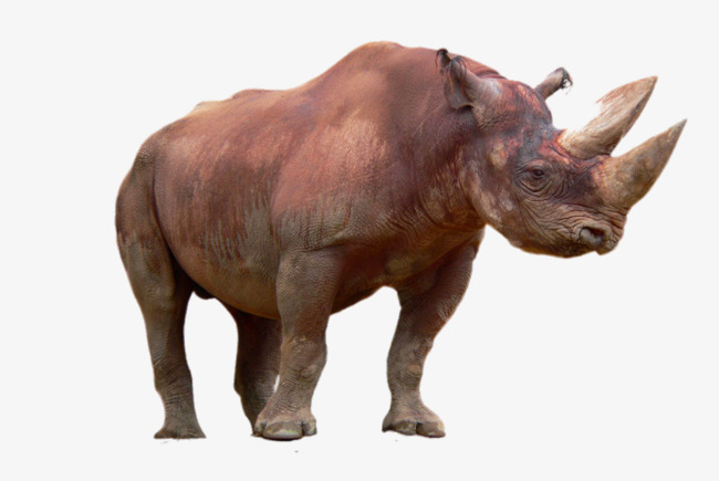 HD animal rhino Free PNG - PNG Rhino