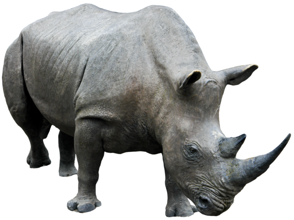 Rhino 03 png HQ by gd08 PlusPng.com  - PNG Rhino