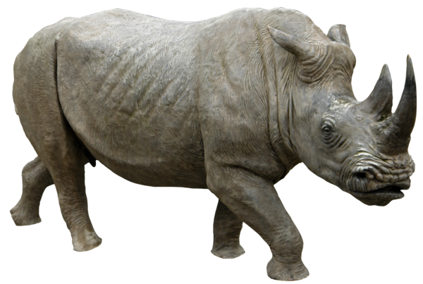Rhino 04 png HQ by gd08 PlusPng.com  - PNG Rhino