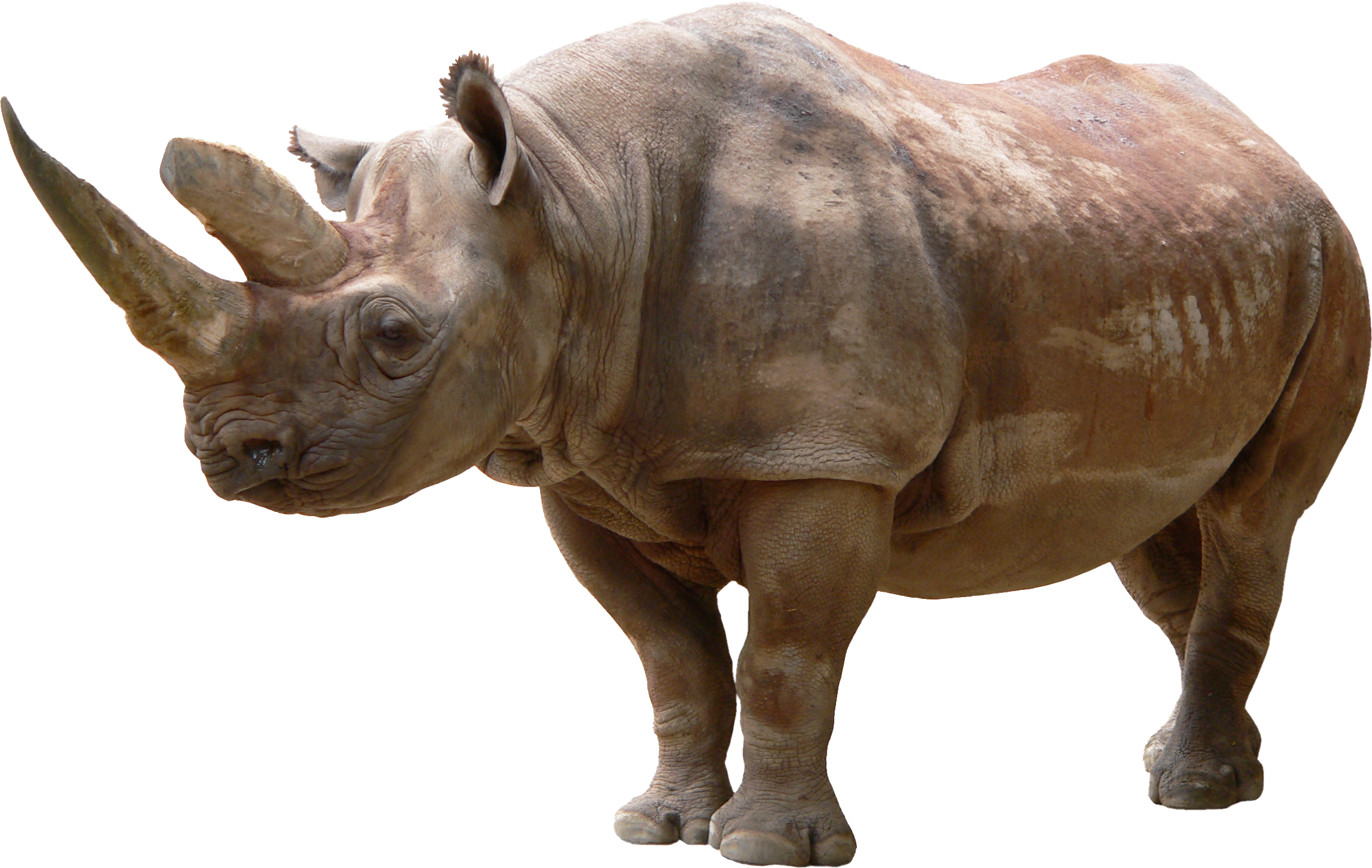 Rhino PNG - PNG Rhino