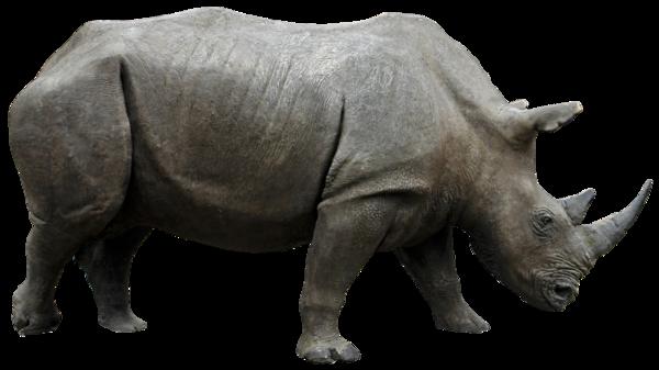 Rhino png HQ by gd08 PlusPng.com  - PNG Rhino