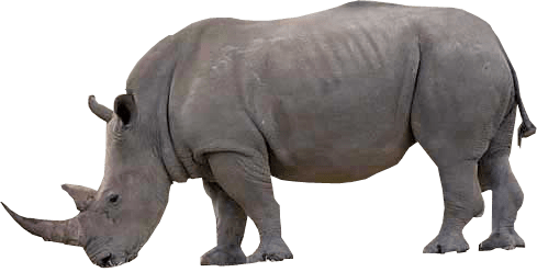 Rhino transparent background image - PNG Rhino