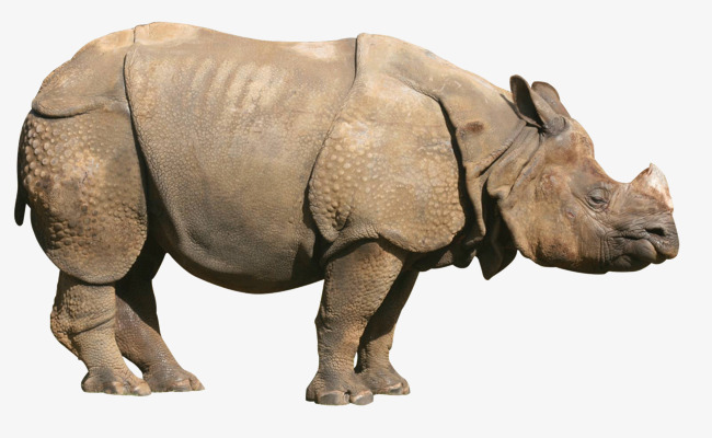 Sides of a rhino Free PNG - PNG Rhino