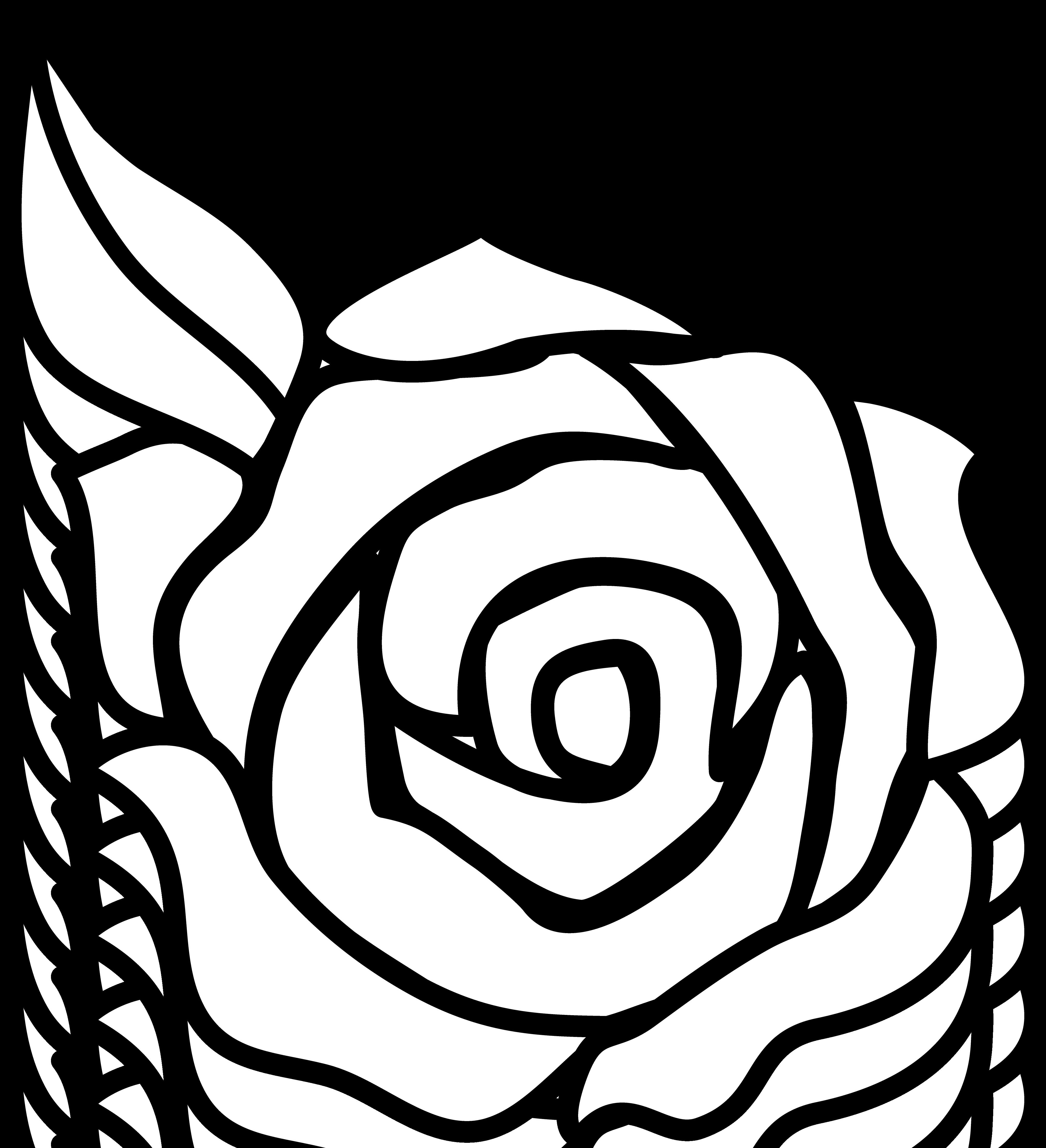 PNG Rose Outline - 75373