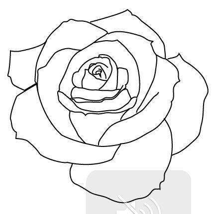 PNG Rose Outline - 75379