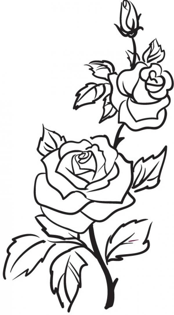 PNG Rose Outline Transparent Rose Outline.PNG Images ...