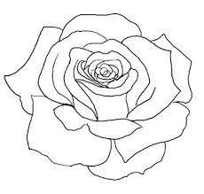 PNG Rose Outline - 75382