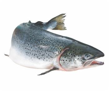 PNG Salmon Fish - 86338