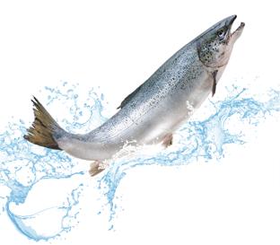 PNG Salmon Fish - 86336