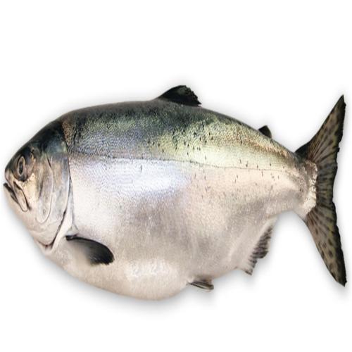 PNG Salmon Fish - 86345