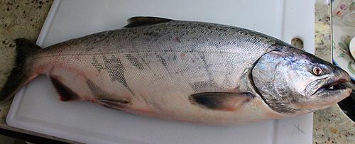 PNG Salmon Fish - 86339