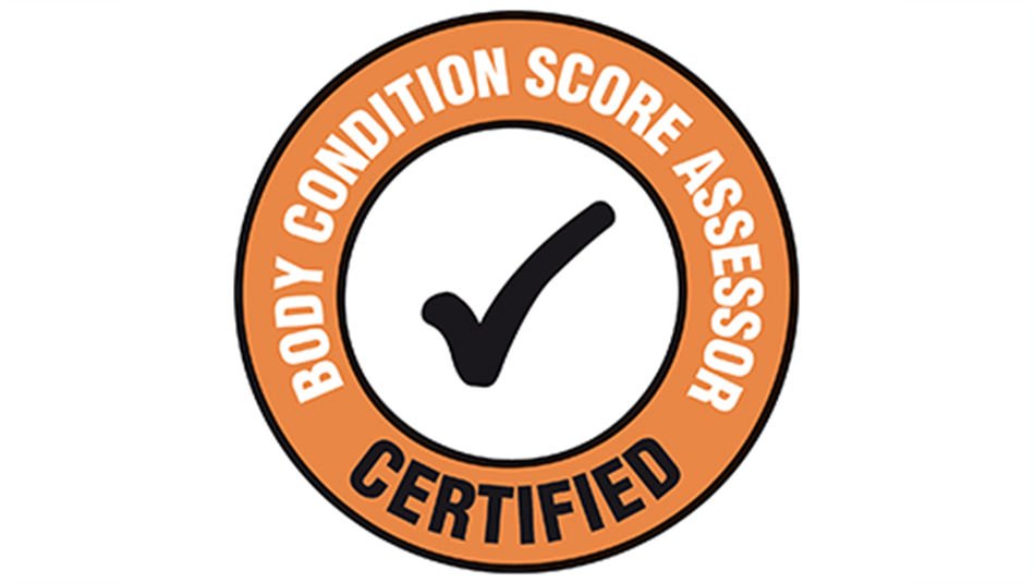 This page details certified body condition assessors who are able to  accurately score your herd. - PNG Score