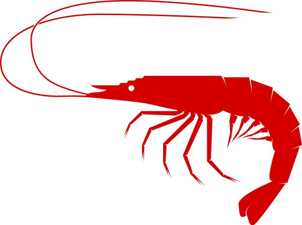 PNG Shrimp - 84520
