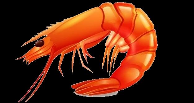PNG Shrimp - 84516