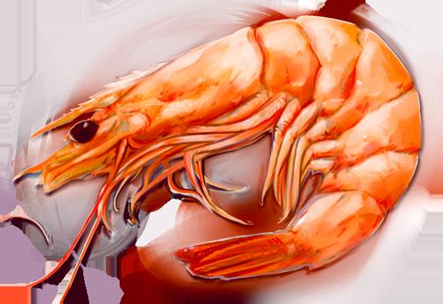 PNG Shrimp - 84521