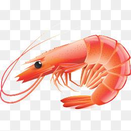 PNG Shrimp - 84514