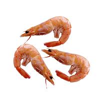 PNG Shrimp - 84518