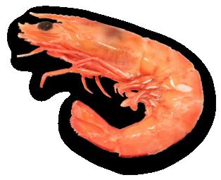 PNG Shrimp - 84513