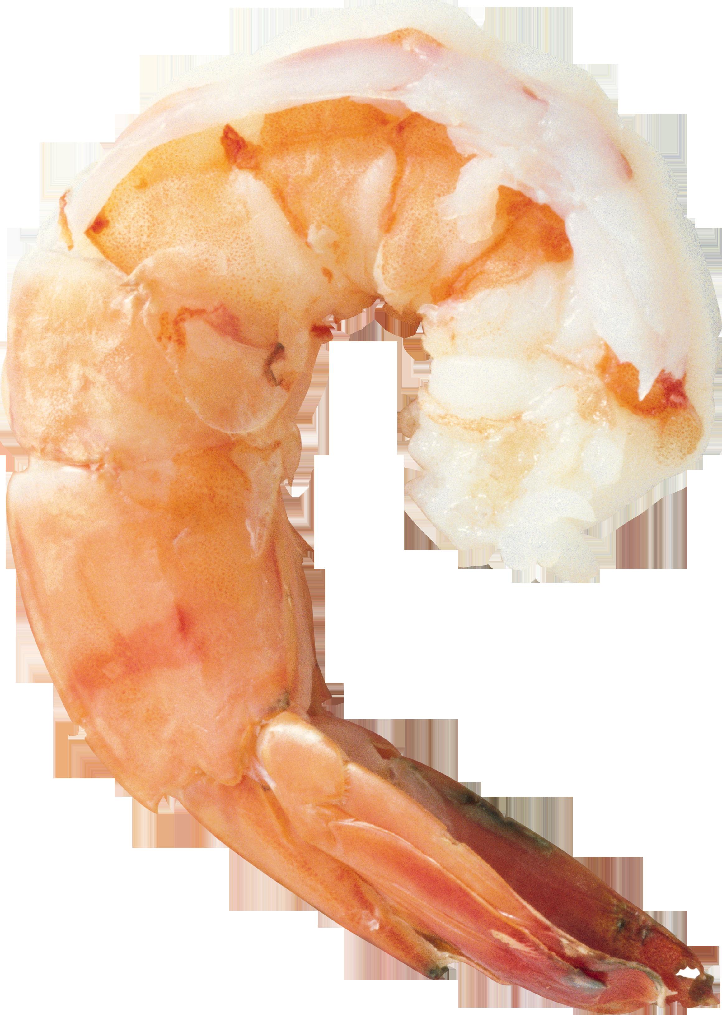 PNG Shrimp - 84512