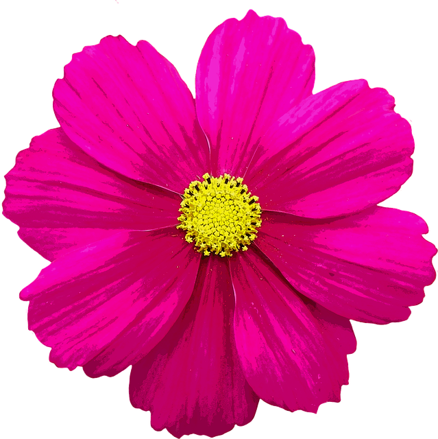 Free illustration: Blossom, Bloom, Flower, Color - Free Image on Pixabay -  1875080 - PNG Single Flower